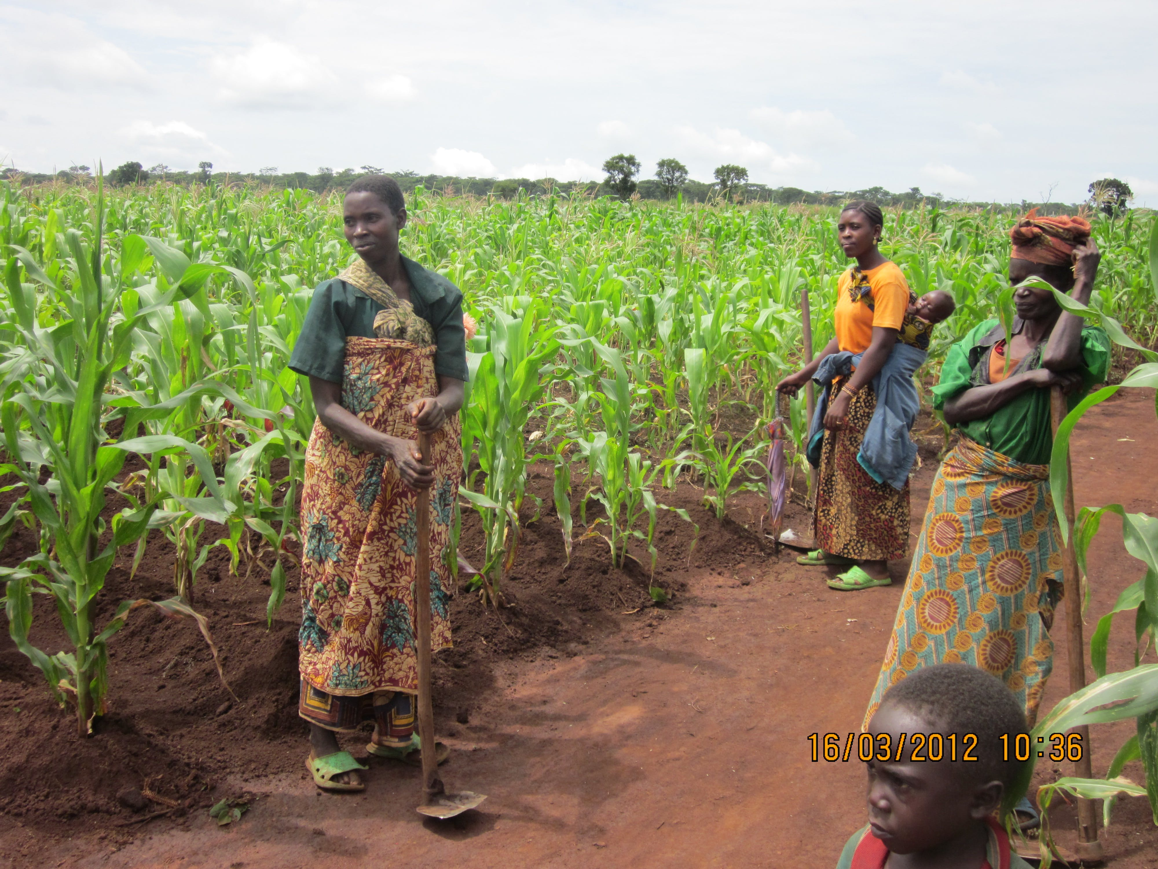 Women farmers in the Congo (DRC) pave the way for healthier families Featured Image