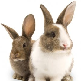 Day 5: 2 Rabbits (8 Days of Giving) Featured Image