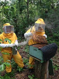 Norlan's beekeeping group produces 320 liters of honey per cycle, amounting to nearly $1500 in sales at the local market, which is distributed evenly between all the members of the group.