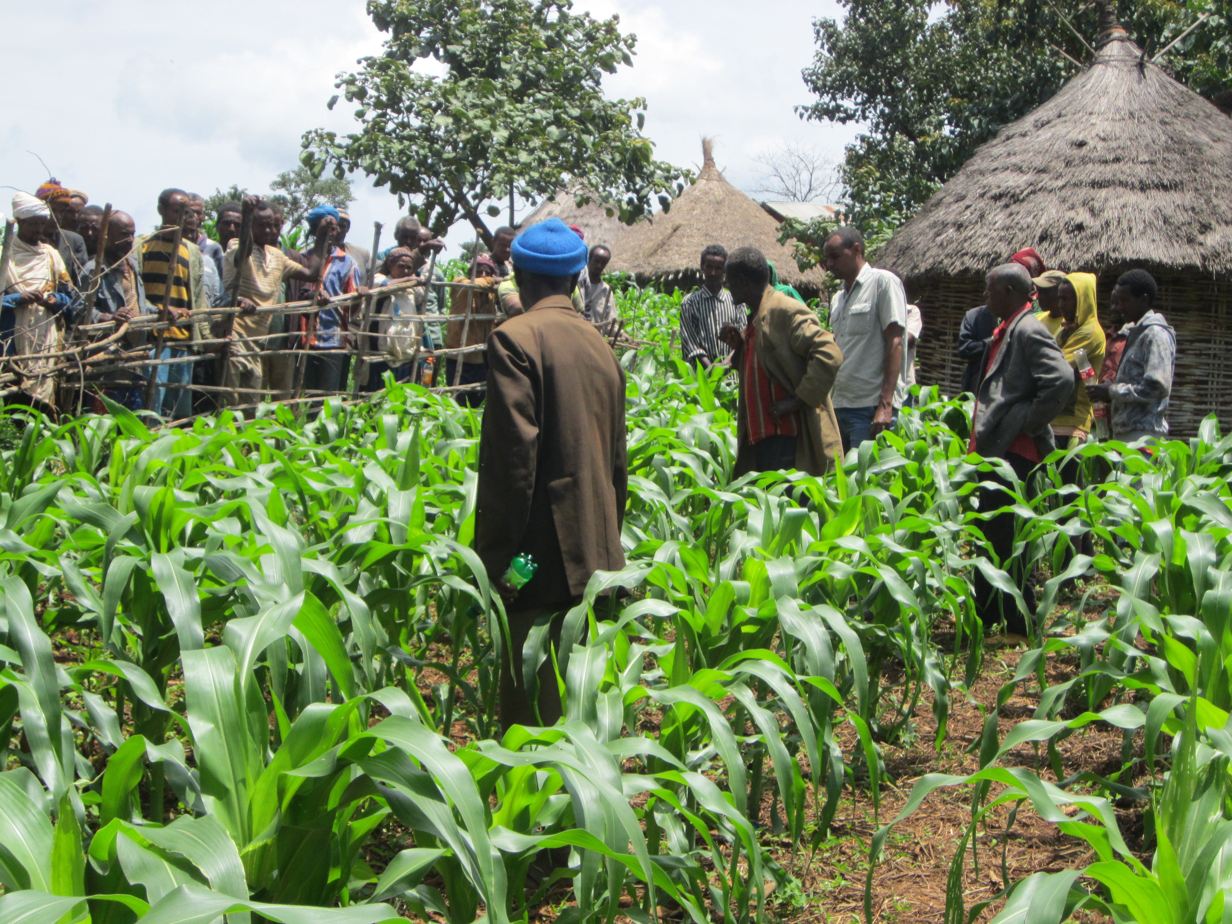 Abdela and his community members walk through his farm.
