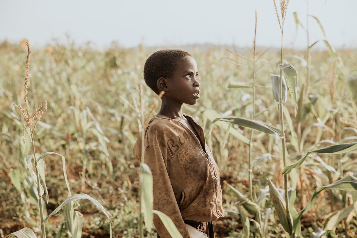 Boy in Burundi stands in a corn field and looks far off into the distance.