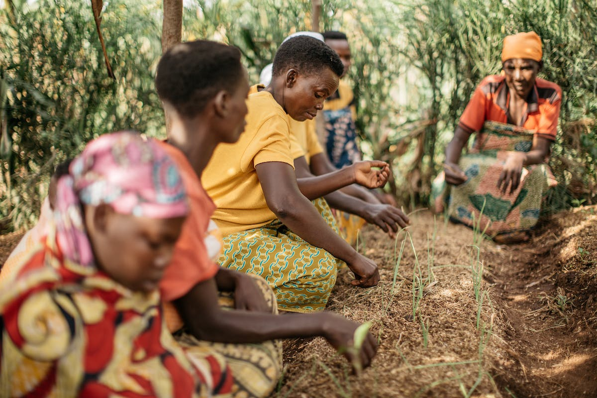 Women in Burundi in colorful clothing plant seeds