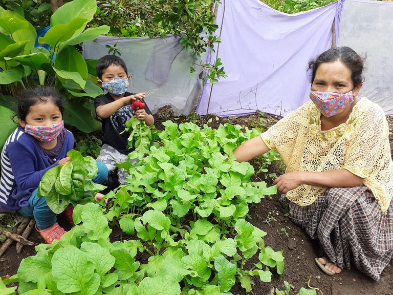 Mother and children picking radishes