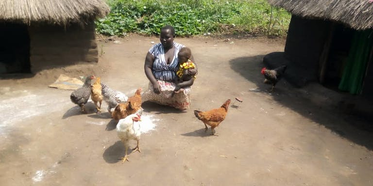 Ugandan woman feeding chickens