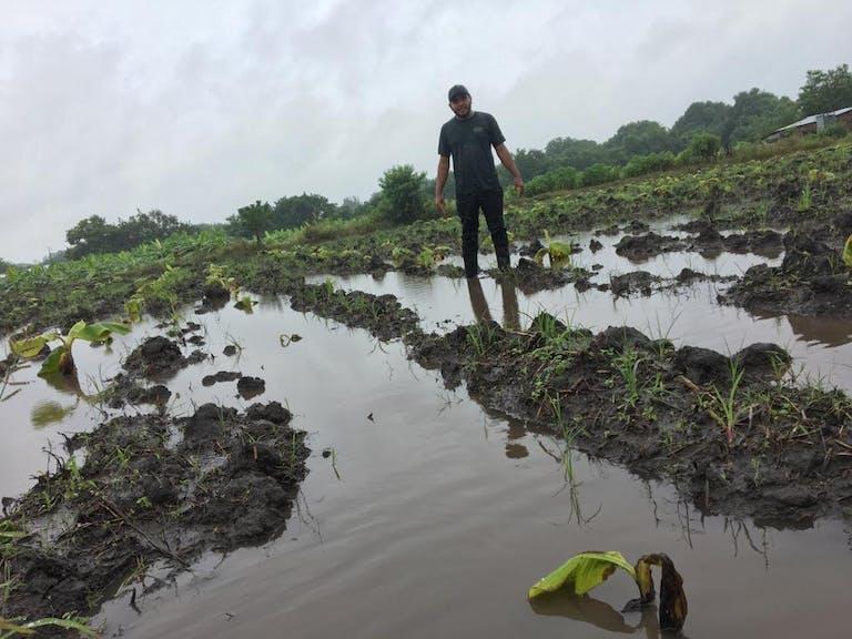 man in black shirt standing in flooded banana field after hurricane eta