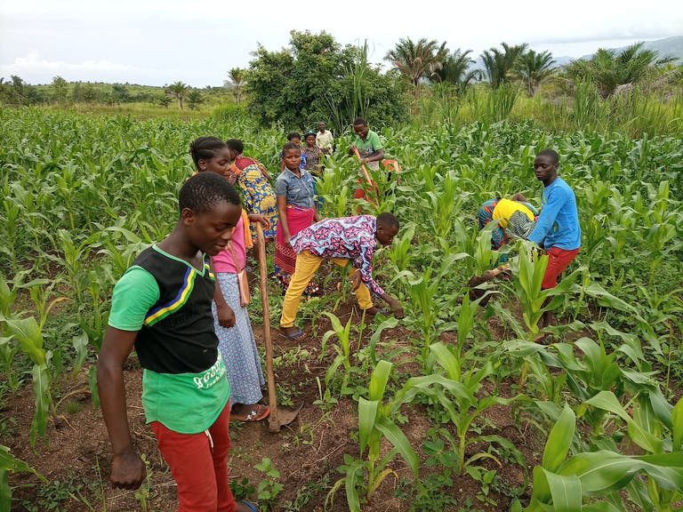 Members of the Mutambala Youth Club learn agricultural skills and raise funds by weeding and caring for a local maize field.